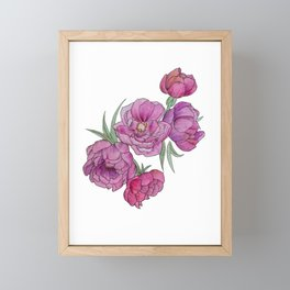 Peonies in Pink and Ink Framed Mini Art Print