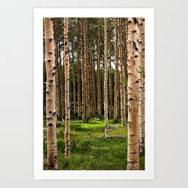Forest for the Trees Art Print