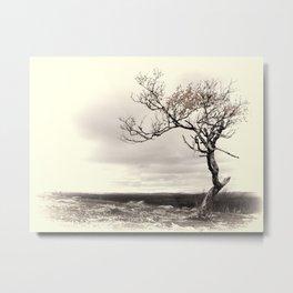 Lonely Tree #5 Metal Print