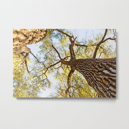 Autumn Forest 25 Metal Print