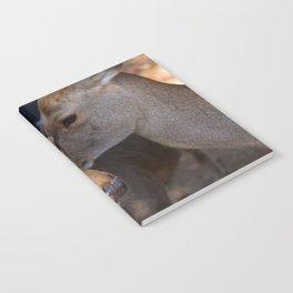 Deer Secrets Notebook