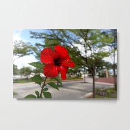 Red Flower Bloom Metal Print