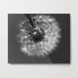 Dandy Dandelion Metal Print