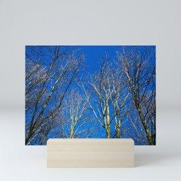 Trees in winter sunlight Mini Art Print