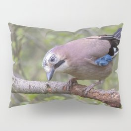 Wild colourful Jay bird Pillow Sham