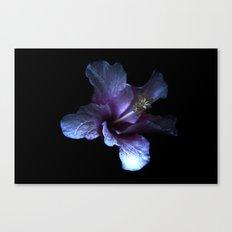 Single flower beauty 3 Canvas Print
