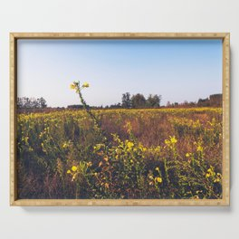 Uncultivated field in the Lomellina countryside at sunset full of yellow flowers Serving Tray