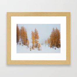 Vibrant Larch Trees Framed Art Print