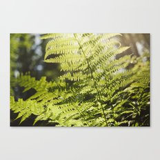 Sun leaf Canvas Print