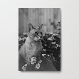 cats and flowers Metal Print