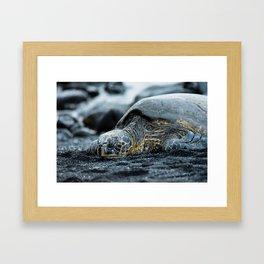Turtle on a Black Sand Beach in Hawaii Framed Art Print