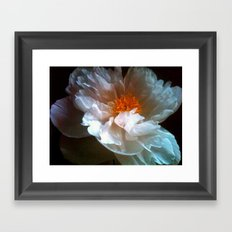 peony petals Framed Art Print