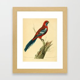 """The Splendid Parrot"" by Sarah Stone, 1790s Framed Art Print"