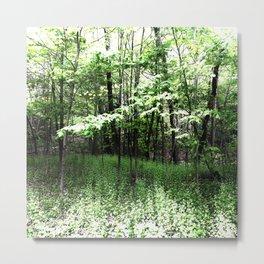 487 - Spring Forest Metal Print