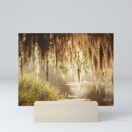 Lowcountry Swamp Mini Art Print