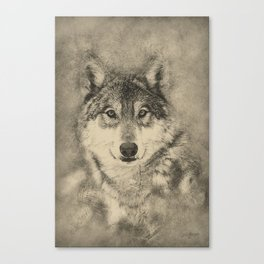 Timber Wolf Pencil Illustration Canvas Print