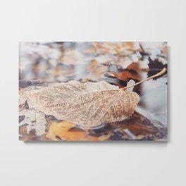 A fallen leaf Metal Print