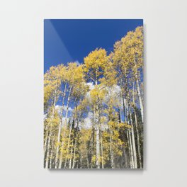 Colorado Aspens Metal Print