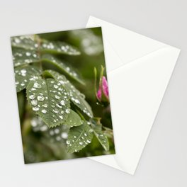 Beautiful close up Raindrops on leaves  Stationery Cards