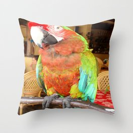 Harlequin Macaw On A Perch Throw Pillow