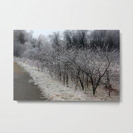 Frozen Sumac Trees Metal Print