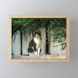 Cat thinking about her next move Framed Mini Art Print
