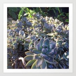 California Succulents Art Print
