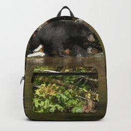 The Salmon Whisperer - A Hunting Black Bear Backpack