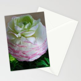 White and Pink Ranunculus Stationery Cards