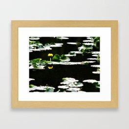 Swimming Solitude Framed Art Print