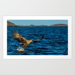 The White Tailed Eagle Art Print