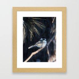 December Chickadee Framed Art Print