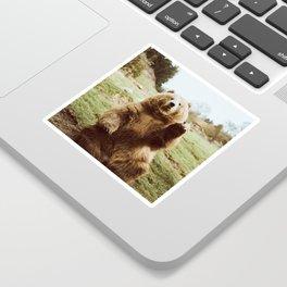 Hi Bear Sticker