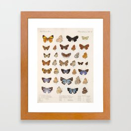 Vintage Scientific Insect Butterfly Moth Biological Hand Drawn Species Art Illustration Framed Art Print