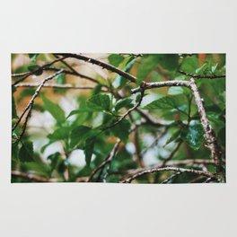 Veins of Nature Rug