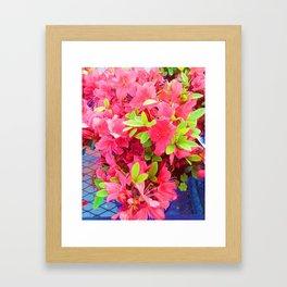 Sweet Fuchsia   Framed Art Print