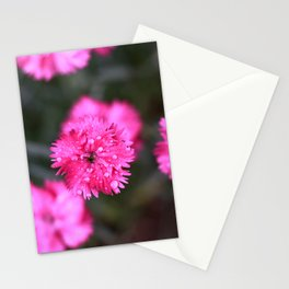 Pink Dianthus Stationery Cards