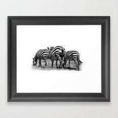 Three Zebras Framed Art Print