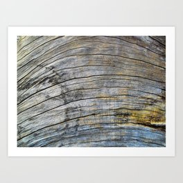 Jersey Wind I Art Print