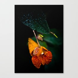 Jewel Weed in the early morning dew Canvas Print