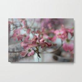pink dogwood #1 Metal Print