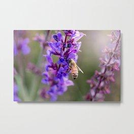 Lavender Bee, Nampa, Idaho Metal Print
