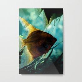 Pterophyllum Scalare fish silhouette underwater Metal Print