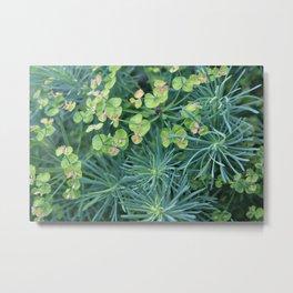 """Euphorbia Cyparissias """"Fens Ruby"""" Metal Print"""