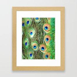 Peacock Feathers Framed Art Print