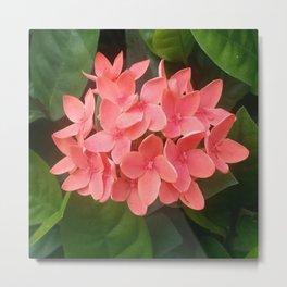 Red Rubiaceae Flower Metal Print