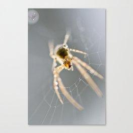 Little Spider Canvas Print