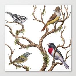 Four Songbirds Canvas Print