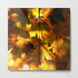 Sun kissed Sycamore leaves Metal Print