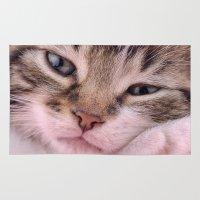kitten Area & Throw Rugs featuring Kitten by Mark Johnson